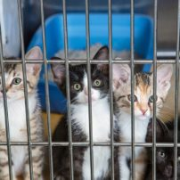 Several kittens that were up for adoption