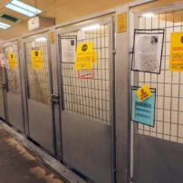 Small, crowded dog kennels need upgrading.
