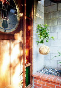 Book: Hanging Kokedama