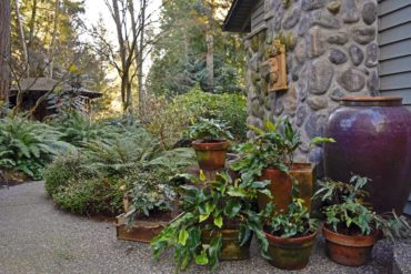 Container plantings of Dave Gibson's favorite ferns