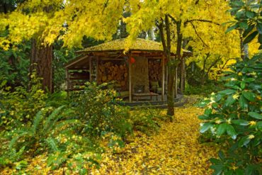 The gazebo sprinkled by fall's gold