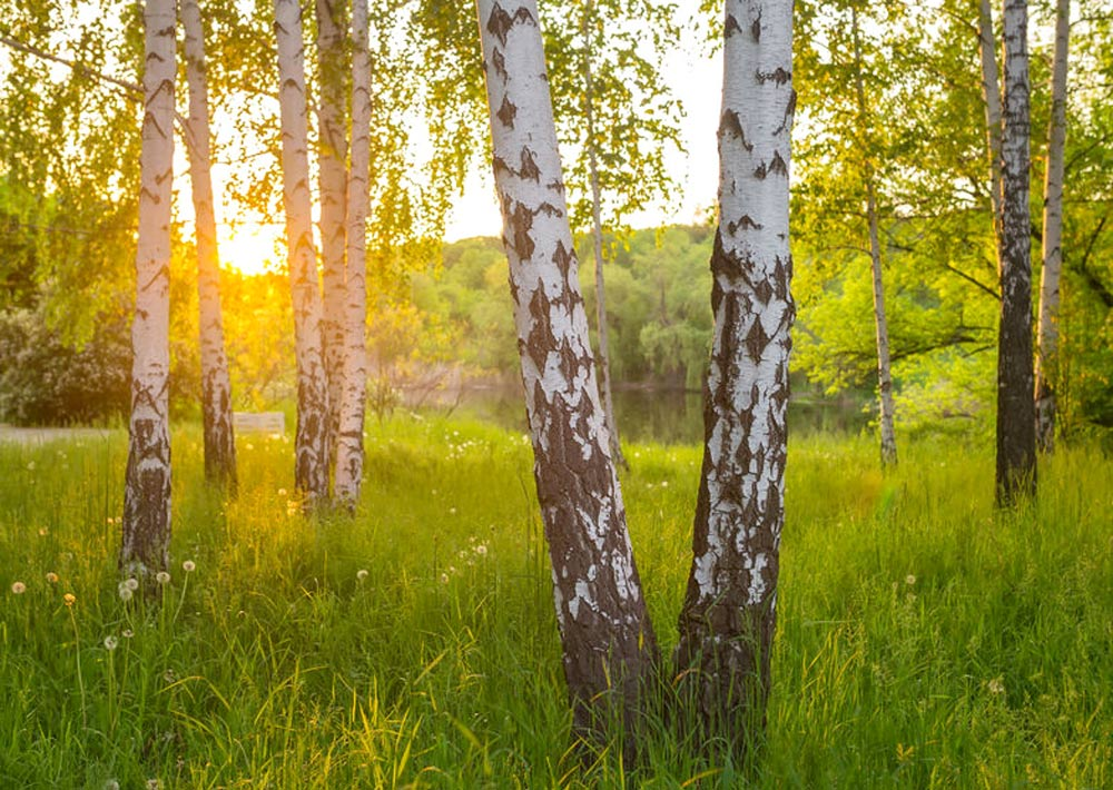 WSHG NET BLOG | 9 Reasons to Plant a Tree this Spring