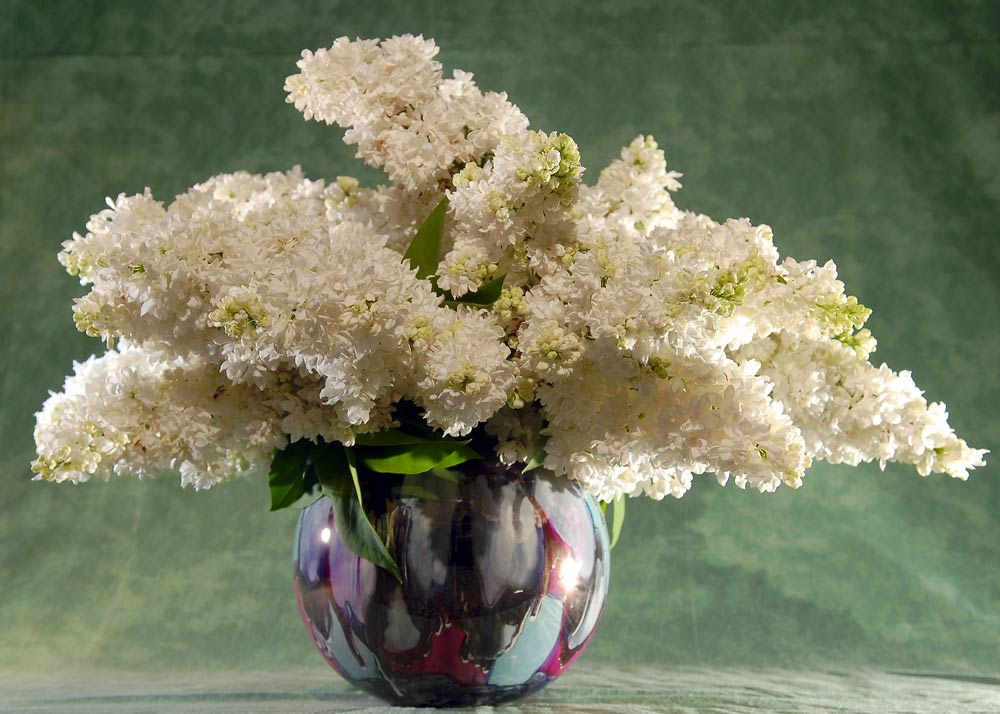 Wshg Blog Some Of The Best Flowers For Beautiful Vase Displays