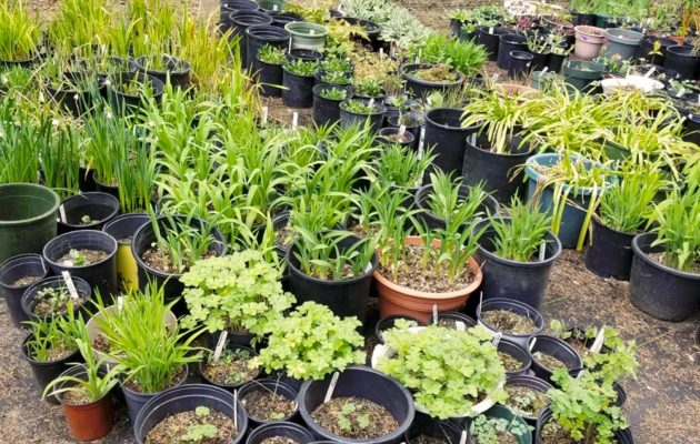 Manchester Library Plant Sale