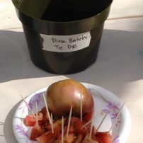 'Pink Berkeley Tie Dye' — A very unique variety at the Tomato Taste-Off