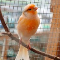 Canary in the greenhouse