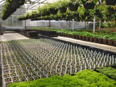 One of several working greenhouses on the property