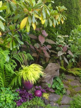 A splash of golden Japanese forest grass plays well with purple foliage of Heucheras and Plum Passion hydrangea.