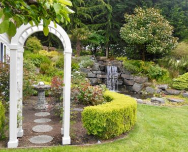 Rose garden, pond and waterfall in the Becks' garden