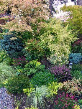 Tapestry of plants in Norene Scott's garden