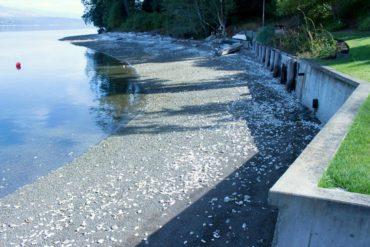 Magical Rocky Beach Retreat