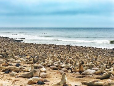 Fur Seal Colony at Cape Cross