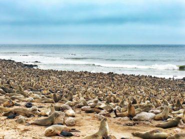 Fur Seal Colony at Cape Cross