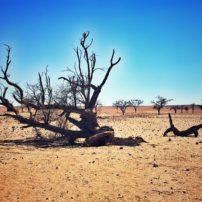 Namib Desert — Dead Vlei