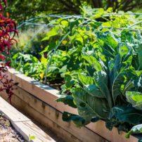 edible garden tour