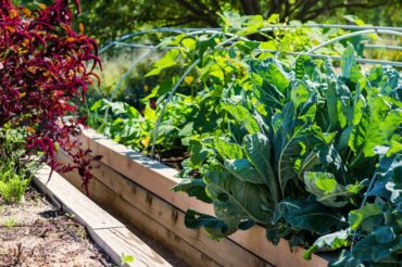 edible garden tour