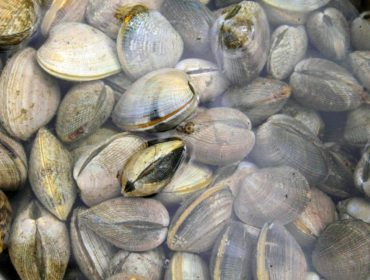 The Port Gamble S'Klallam Tribe is known for its clambakes.