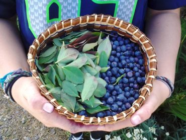 Blueberries and huckleberries are rich in vitamins and antioxidants and play an important role in the healthy diets of Northwest indigenous peoples.
