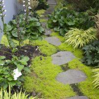 Irish moss, golden baby tears, acanthus, bergenia 'Winter Glow'