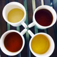 Four kinds of tea at the Tea Plantation tour