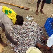 Fish market in Dodanduwa