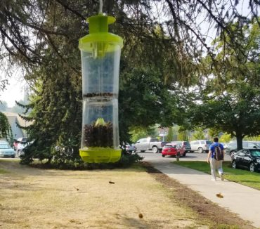 A wasp trap in Pullman lures wasps away from people. (Photo by Linda Weiford, WSU News)
