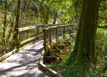West Hylebos Wetlands trail (Photo by Susan Elderkin)