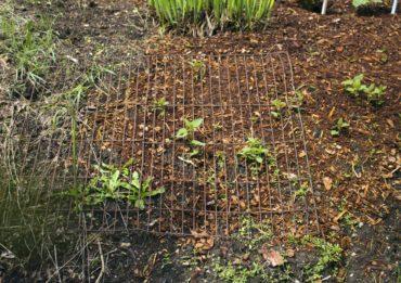 A metal grid helps keep deer away.