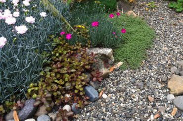 Sedum, wooly thyme and varieties of pinks weave together.