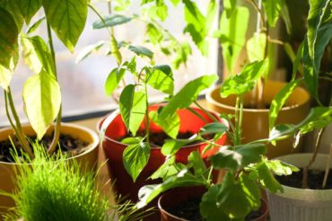 Grow herbs or other leafy greens indoors under a Growbar LED light fixture or near a sunny window.