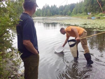 Washington Sea Grant ecologist Jeff Adams searches for freshwater invertebrates for participants to analyze in training.