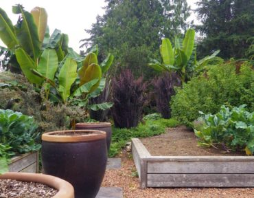 Vegetable garden with banana trees in the background