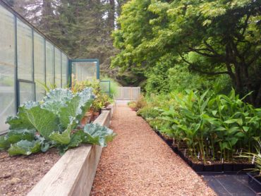 Greenhouse, vegetables and Windcliff nursery plants