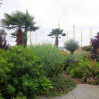 Palms and prayer flags