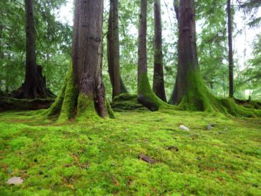 Bloedel Reserve Moss Gardens
