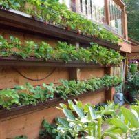 Solar Energy Enhances Northwest Gardening