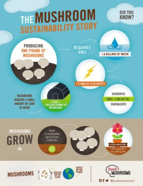 The mushroom sustainability story: Water, energy and climate environmental metrics