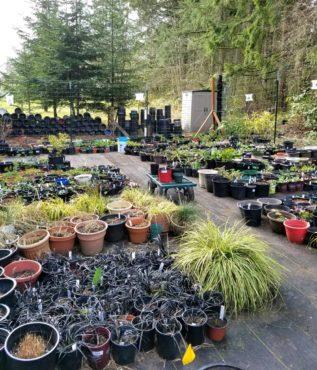 Plant Yard