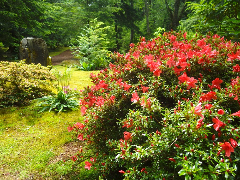 Wshg Net How To Identify Common Rhodie Problems Featured The