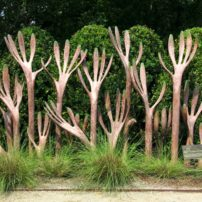 "North Carolina Botanical Garden's ""A Hedge against Extinction"""