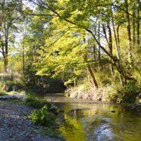 Chico Salmon Park