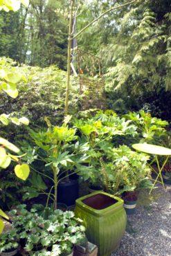 Savage Plants