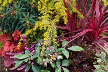 Clockwise beginning at upper left is spurge (Euphorbia 'Purpurea'), golden Duchess hemlock (Tsuga canadensis 'MonKinn'), cabbage palm (Cordyline australis 'Cherry Sensation'), ivy (Hedera helix 'Gold Child'), kinnikinnick (Arctostaphylos uva-ursi), hellebore (Helleborus 'Pink Marble'), winter heath (Erica carnea 'Winter Sun') and coral bells (Heuchera 'Fire Chief').