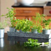 Galvanized Herb Planters