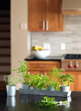 Indoor herb kits keep gardeners growing all year, while providing fresh herbs for flavoring and garnishing meals. (Photo courtesy Gardener's Supply Company)