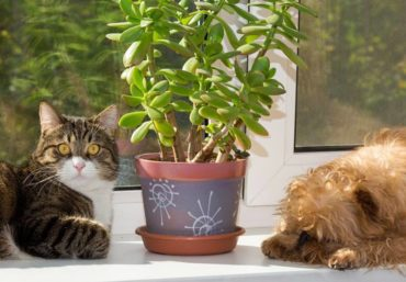pets and plants