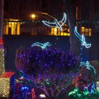 Kingston Holiday Lights
