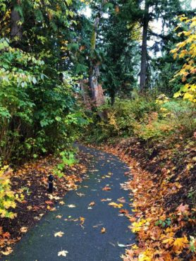 Bonhoeffer Botanical Gardens fall colors