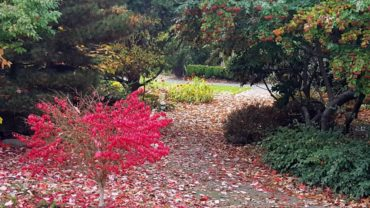 South Seattle College Arboretum