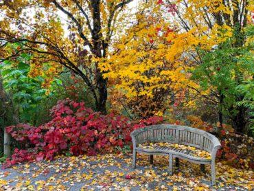 Bellevue Botanical Garden in autumn